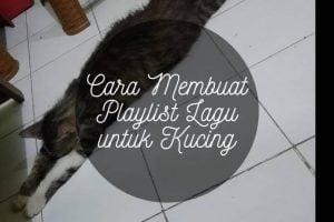 Cara Membuat Playlist Lagu untuk Kucing